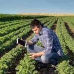 A farmer, holding a tablet and crouching among rows of crops.
